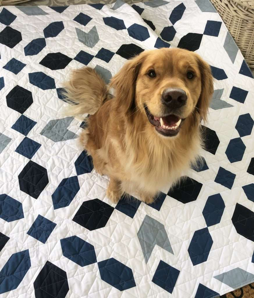 Connector Quilt throw size with golden retriever dog